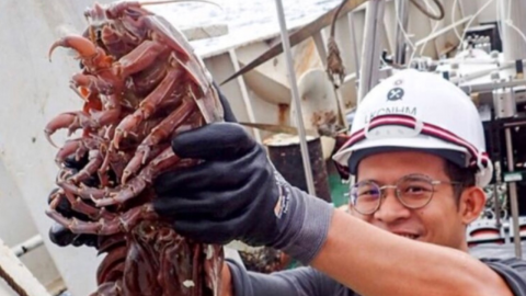 Scientists Have Discovered This Absolutely Terrifying Giant 'Sea Cockroach'