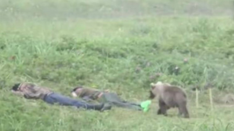 Shocking footage shows two travellers rudely wakened by a curious bear