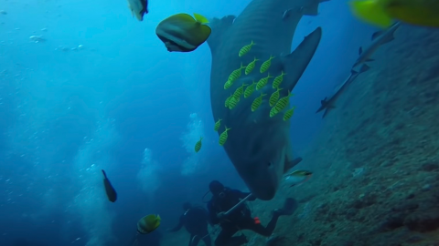 One diver suffered a terrifying moment as a shark decided to put its jaws around his head