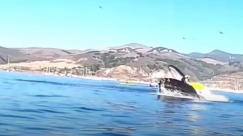 This hungry whale almost made a meal out of these kayakers