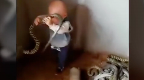 Toddler discovered a snake nest and his reaction was priceless