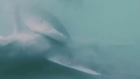 Check out this spectacular video of one shark devouring another shark