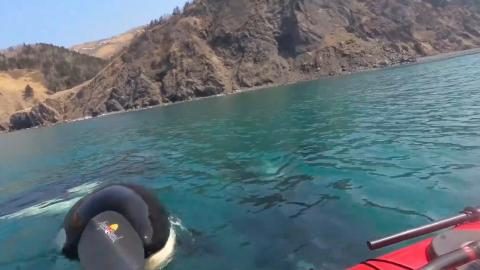 The terrifying moment kayakers were approached by three killer whales