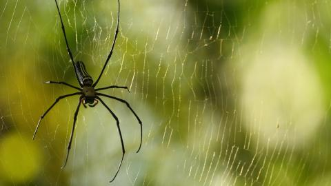 It literally rains spiders in Brazil (VIDEO)