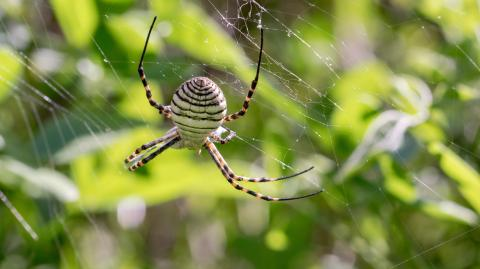 A real life version of the spider from harry potter has been discovered