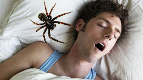 This is how many spiders you really swallow in your sleep
