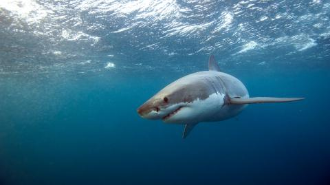 New Zealand Sees First Fatal Shark Attack in Eight Years as Teenager Mauled to Death by Great White