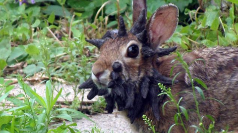 These brothers were shocked to find this mutant rabbit in their garden