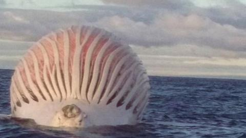 Fishermen approached mysterious ball in the ocean without knowing it was very dangerous