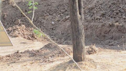 Can you spot the leopard in this picture?
