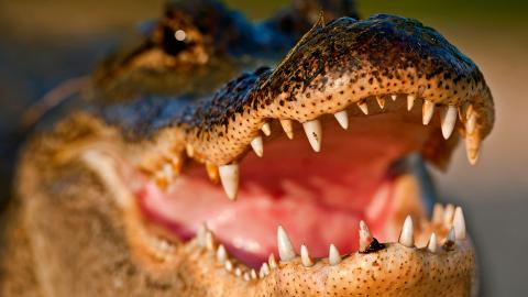 An Aussie managed to survive a croc attack through sheer strength and reflexes
