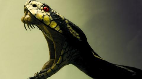 The secret behind the evolution of snake venom has finally been revealed