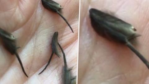 Man discovers terrifying creature yet to be classified by experts