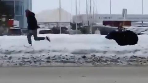 Watch this bear chase a man across town