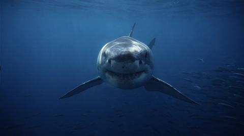 9-year-old boy was violently attacked by shark in Miami