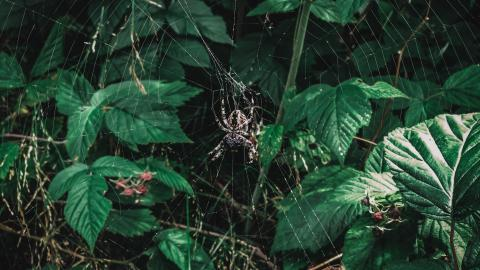 A new spider has been discovered in Australia
