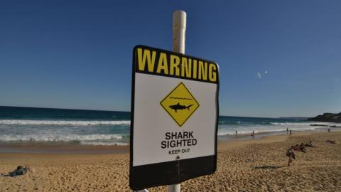 Australian surfer dies after being attacked by a shark
