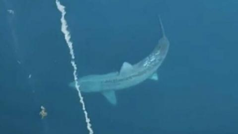 TikTok video of a gigantic shark thought to be extinct goes viral