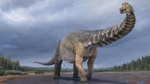 Meet Australotitan, the largest dinosaur ever unearthed in Australia