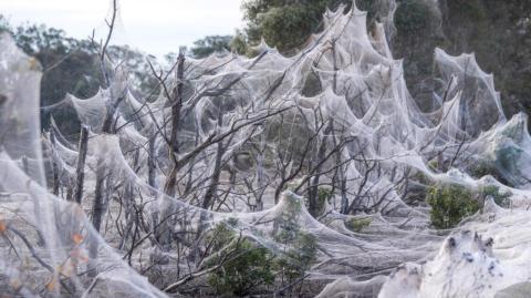 Horrifying spider webs smother entire Australian region after floods