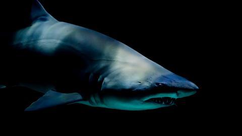 Shark attacks drunk man urinating in the sea in Brazil
