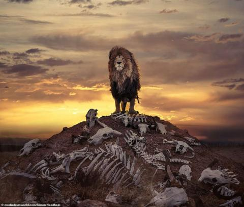 British photographer captures lion on hill of bones in South Africa