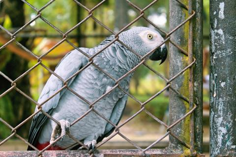 Five 'naughty' parrots have been separated for swearing in unison at zoo visitors