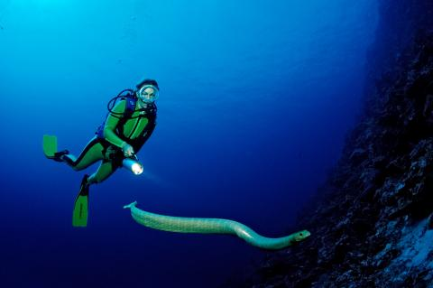The poisonous sea snakes looking to mate with scuba divers