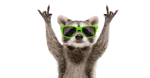 Drunk Raccoons Cause A Ruckus In A Residential Neighborhood