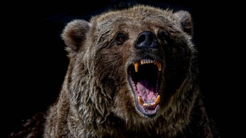 Bear devours tourist in front of his terrified friends at a Russian national park