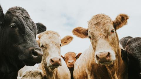Sobering research reveals the impact of meat on greenhouse gas emissions