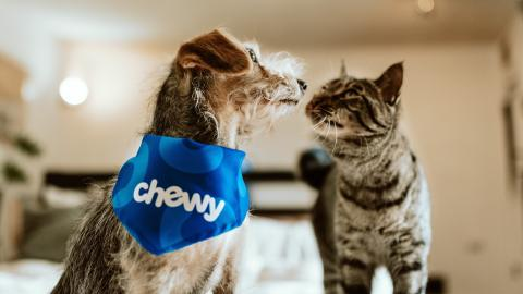 British COVID variant found to be dangerous to cats & dogs