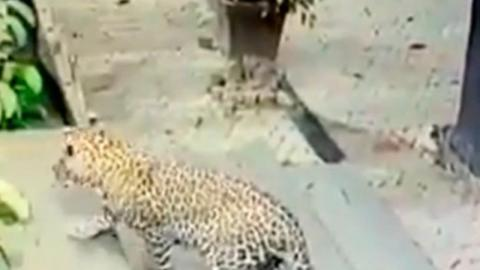 Check Out This Amazing Video Of A Dog's Miraculous Escape From A Hungry Leopard