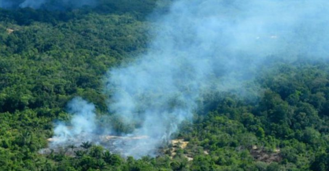 Devastating Images Of The Amazon Rainforest On Fire Are Spreading Across The Web