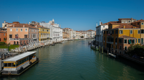 Sea life is flourishing in Venice's now crystal clear canals