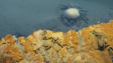 This deadly underwater lake will kill anything that enters it