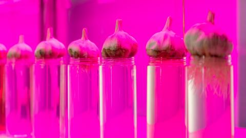One of the world's oldest experiments germinates 142-year-old seeds