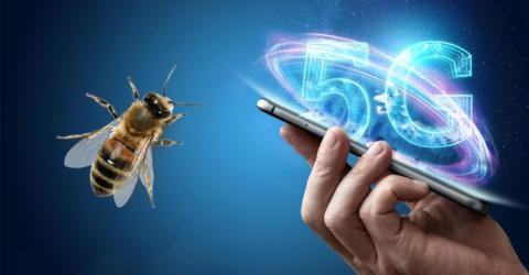 The Terrible And Unexpected Effect 5G Has On Insects
