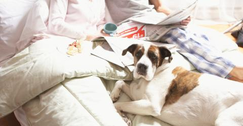 If You Let Your Dog Sleep In Your Bed, You Need to Stop Immediately