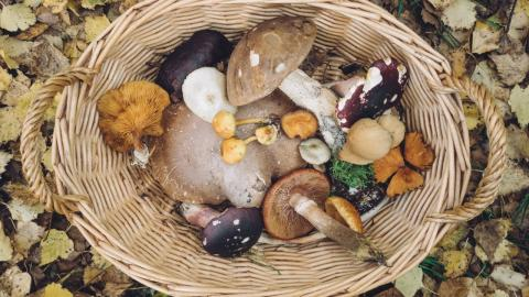 New study find that eating mushrooms will lower the risk of cancer by 45%