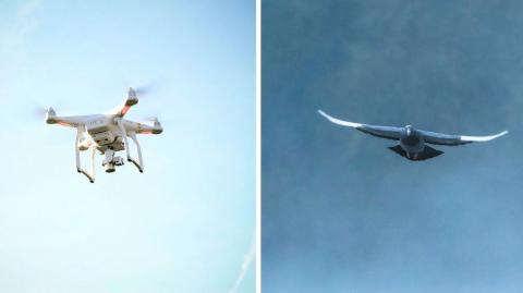 The incredible story of spy pigeons, the drones' precursors