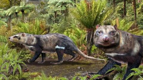 A new 72-year-old species of mammal has been discovered in Chile