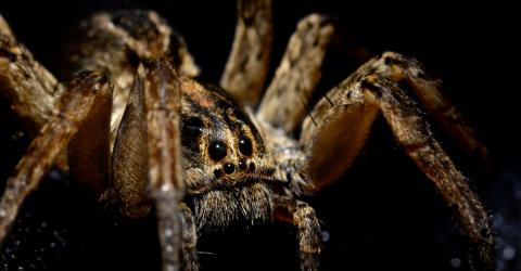 Spiders Are Becoming More Aggressive For A Very Worrisome Reason