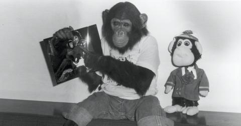 Do You Remember Bubbles, Michael Jackson's Chimpanzee? Here's What He's Doing Now