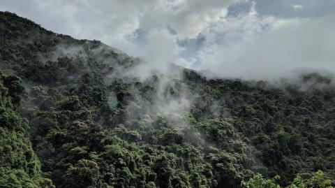 The Amazon rainforest is now releasing more carbon pollution than it is absorbing
