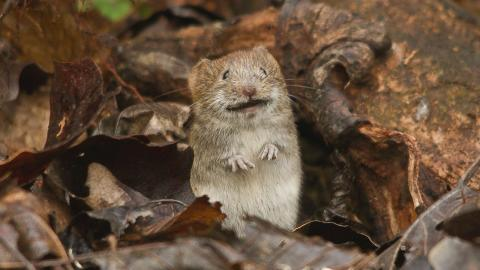 A mouse plague has been devastating Australia