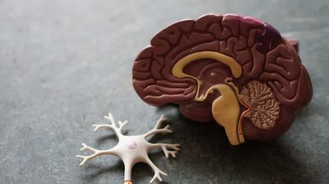 Coronavirus causes stroke in young people: here's how the virus gets into the brain
