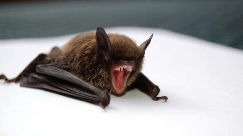 WHO investigation proves bats were being kept for research at Wuhan lab