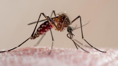 WHO approved world's first malaria vaccine for rollout in Africa