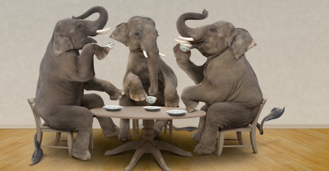 This is what happens when you give an elephant LSD
